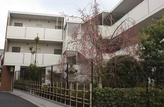 一乗寺桜ワイドブログ