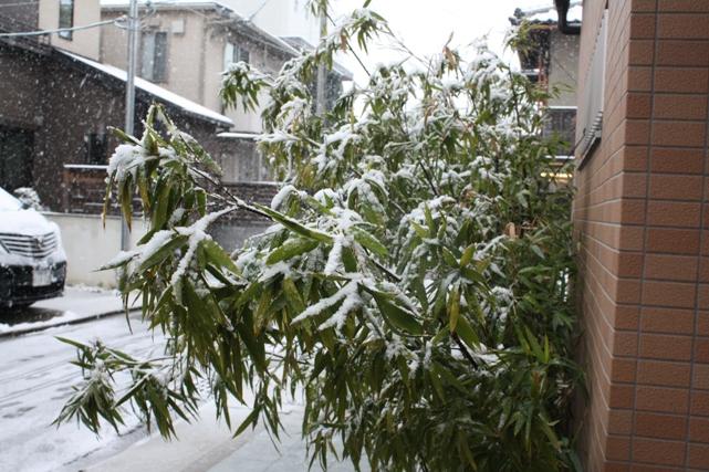 雪だ玄関ブログ用